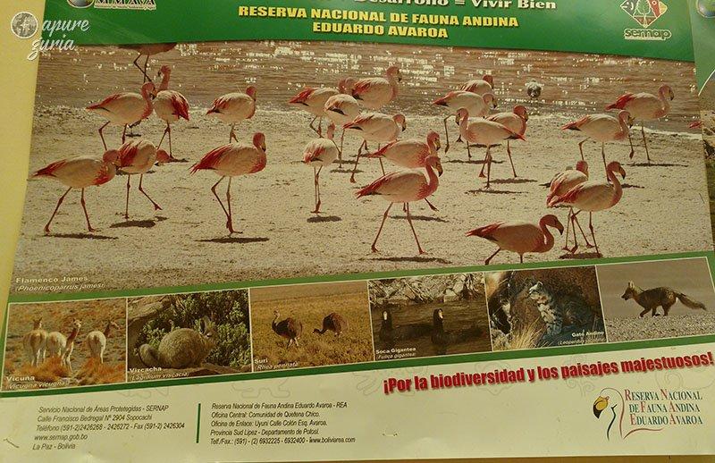 animais reserva nacional eduardo avaroa