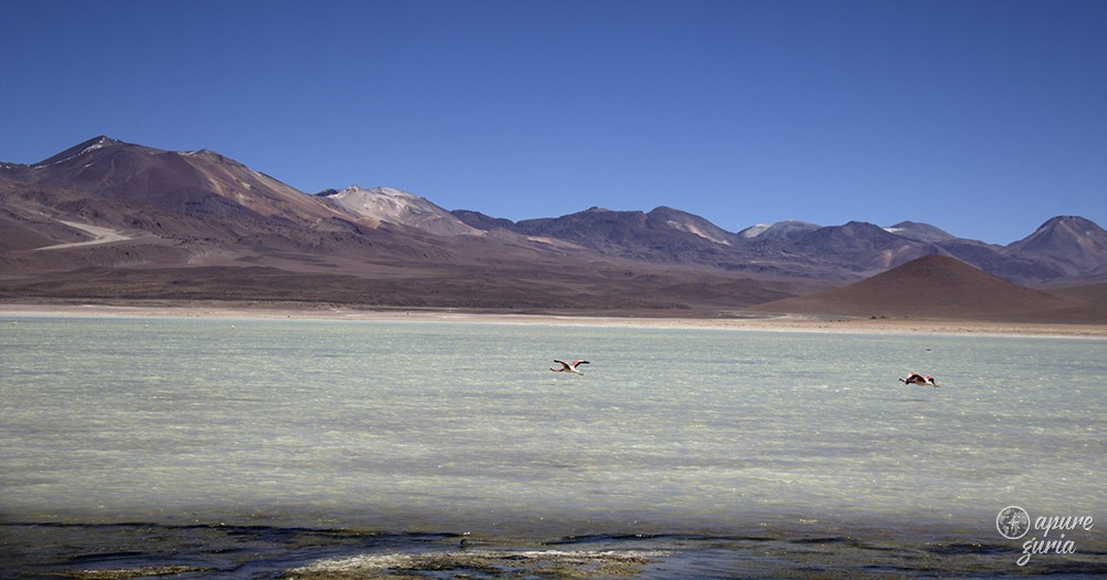 flamingos laguna blanca