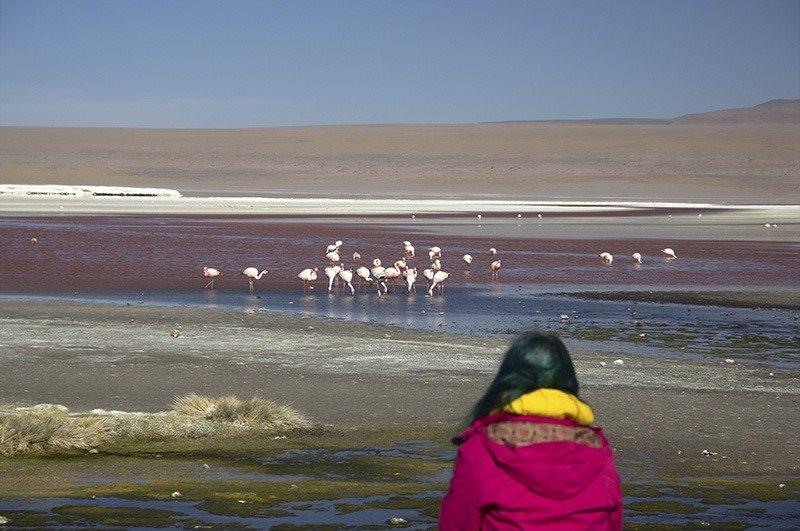 flamingos laguna colorada bolivia salar de uyuni