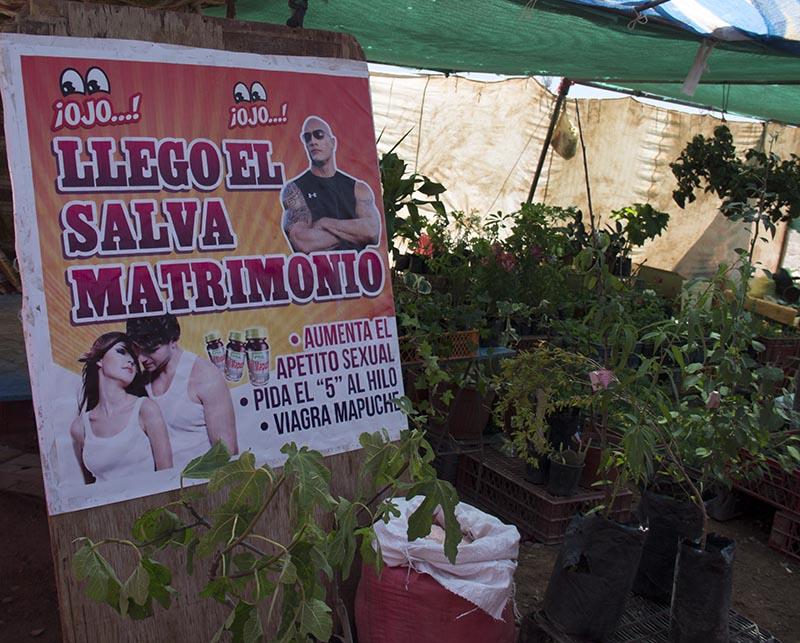 plantas-medicinais-sexuais-atacama