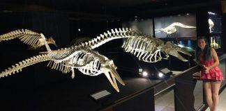 esqueleto orca museu oceano piçarras