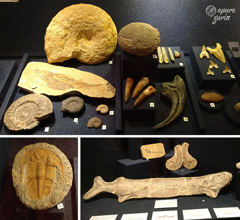 fosseis museu oceanografico univali