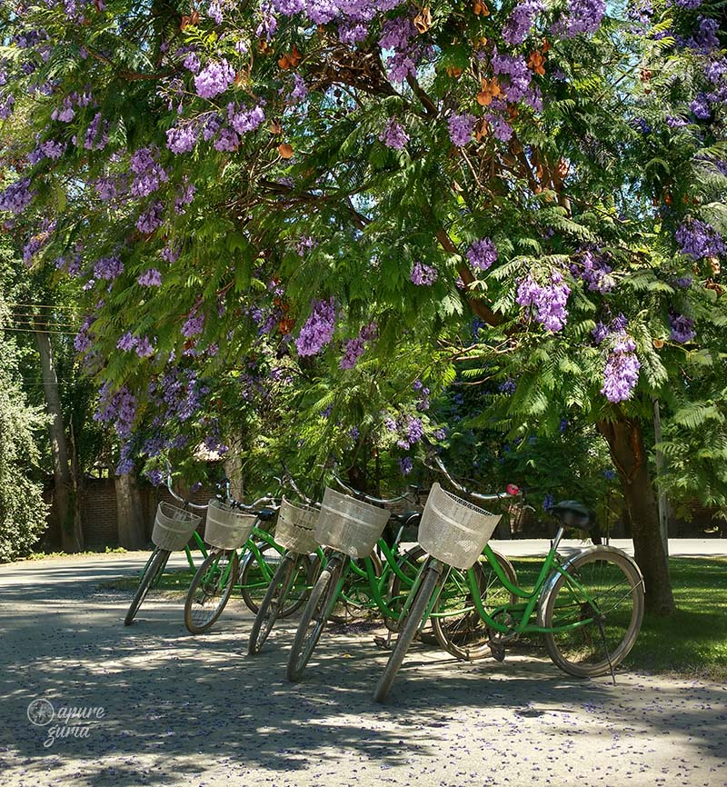 la bicicleta verde cousino macul bike wine