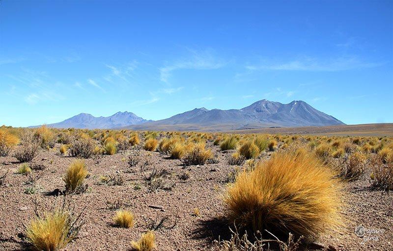o que fazer no deserto do atacama lagunas altiplanicas