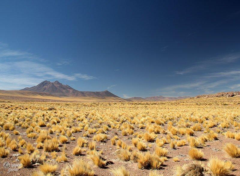 roteiro deserto do atacama lagunas altiplanicas