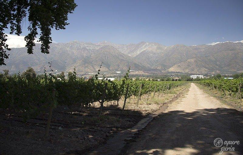 vinhedos em santiago vinicola cousino macu