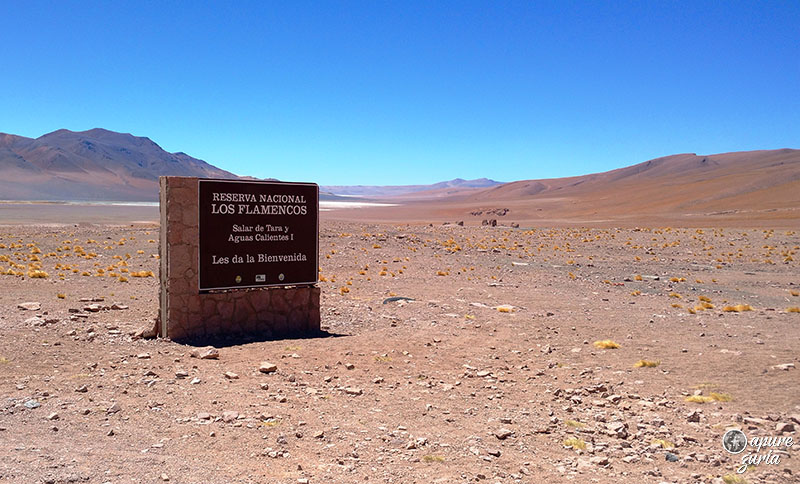 reserva nacional de los flamencos chile
