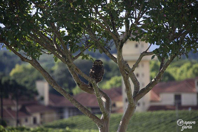 coruja vale dos vinhedos bento goncalves