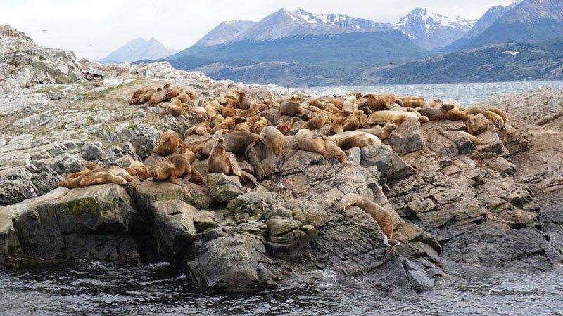 passeio no ushuaia ilha dos lobos