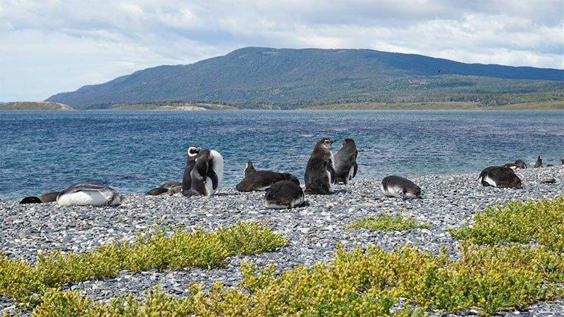 passeio pinguinera ushuaia vale a pena