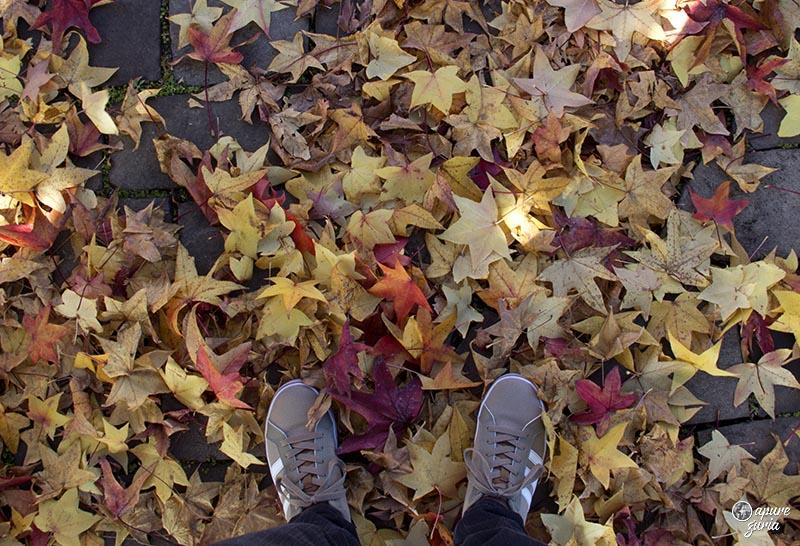 folhas no chao amarelas outono serra gaucha