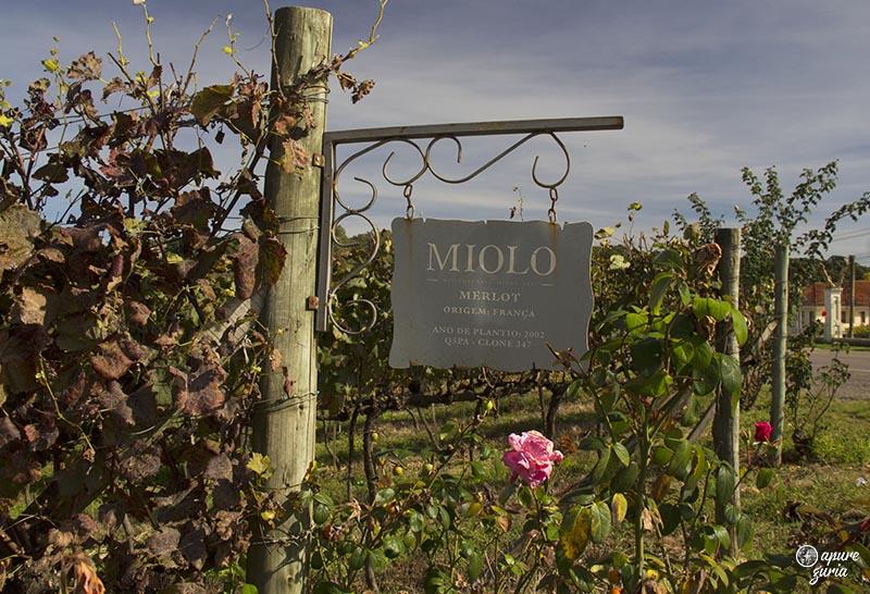 miolo vale dos vinhedos outono