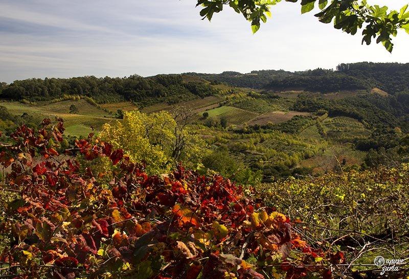 outono no vale dos vinhedos bento goncalves outono