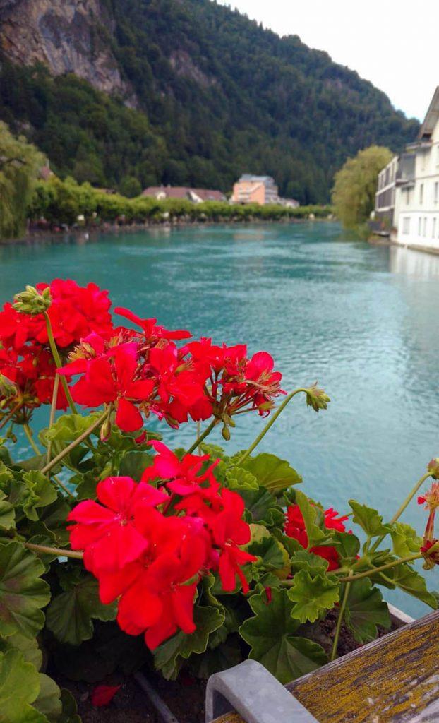 flores em interlaken rio aare