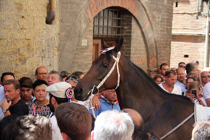 corrida de cavalos em siena palio
