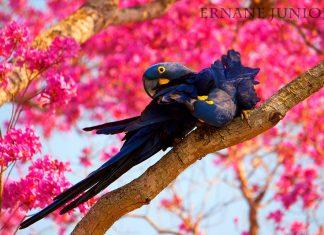 10 experiências incríveis na América do Sul pantanal