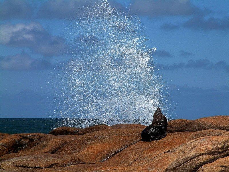 leao marinho uruguai praias roteiro