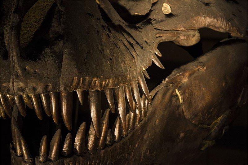 dentes tiranossauro rex