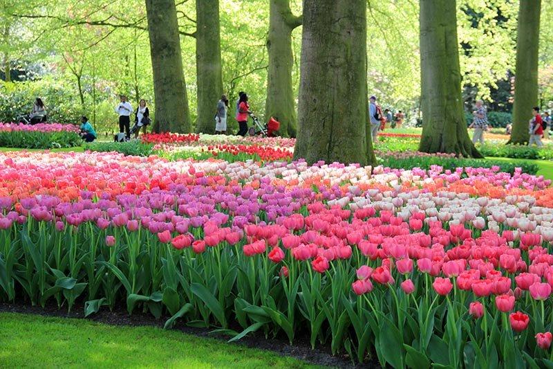 dicas para visitar parque de tulipas na holanda