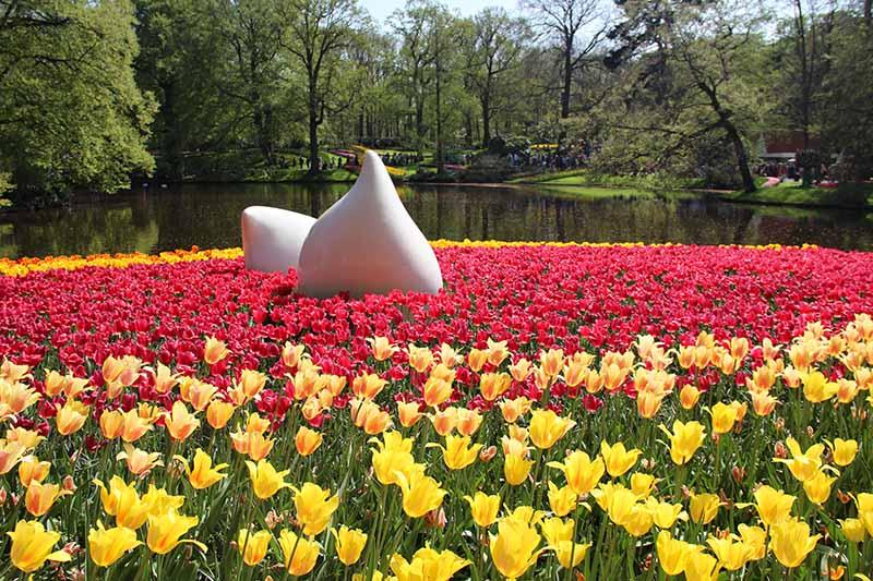 escultura bulbo tulipa keukenhof ficas