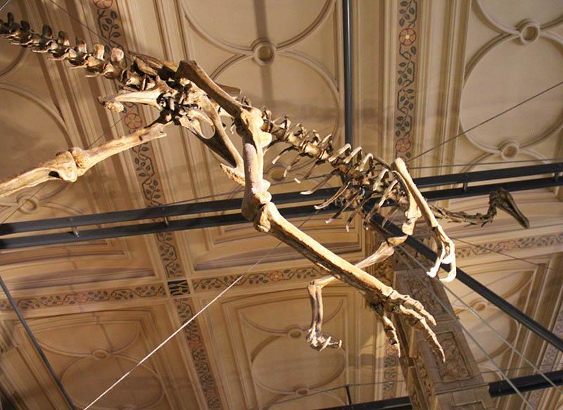 esqueleto de dinossauro museu em londres historia natural