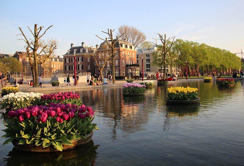 lago Museumplein tulipas