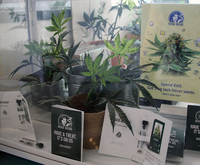 loja maconha amsterdam planta
