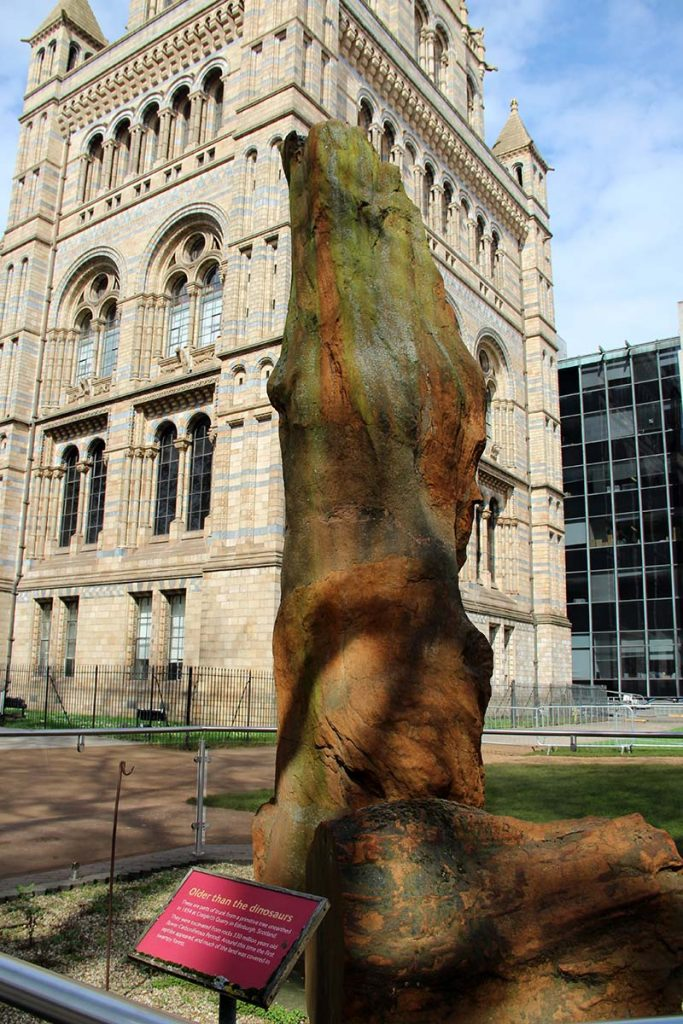 museu natural em londres arvore antiga