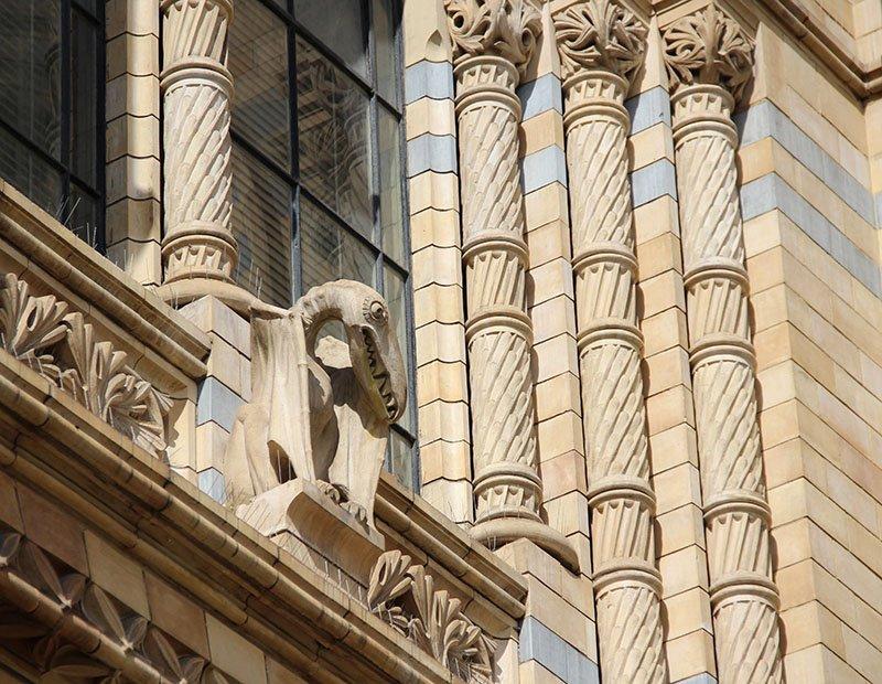 pterodactil gargula natural history london dicas