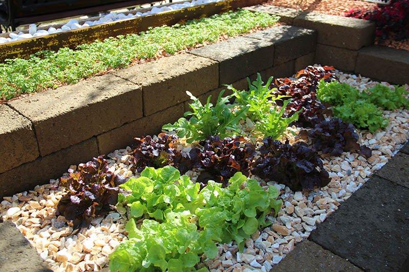 jardim horta praca cidade bassano del grappa