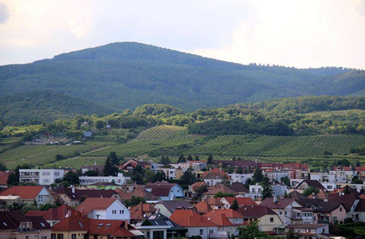 vinho na eslovaquia vinhedos em modra