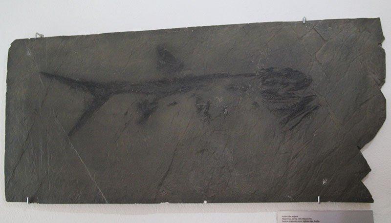 fossil peixe castelo bled eslovenia