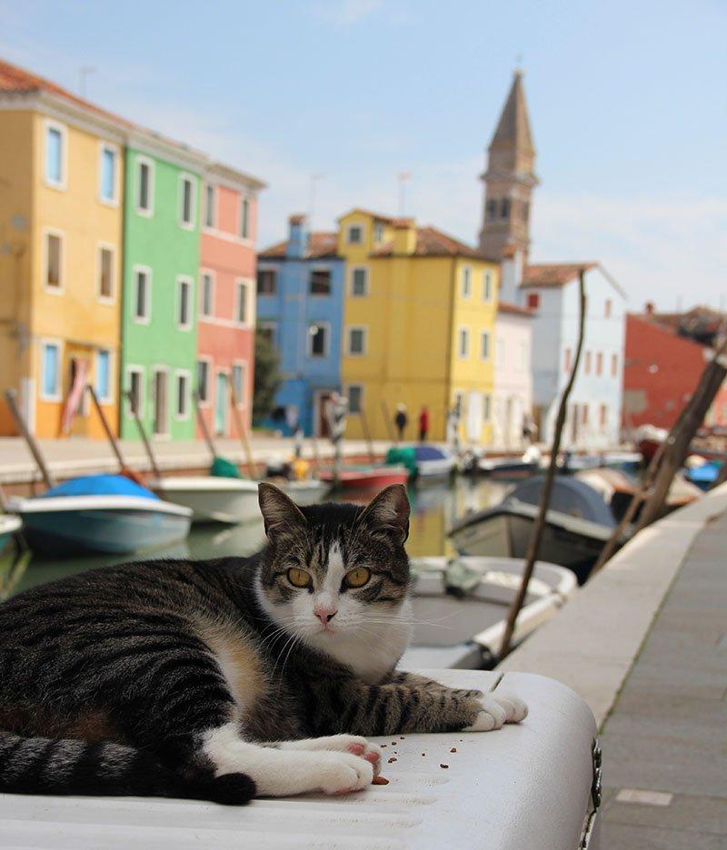 gato em burano veneza