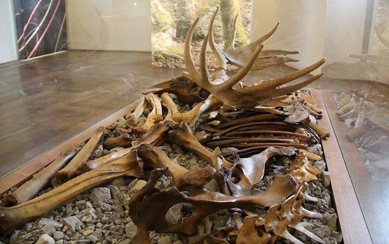 ossos museu castelo de bled dicas eslovenia
