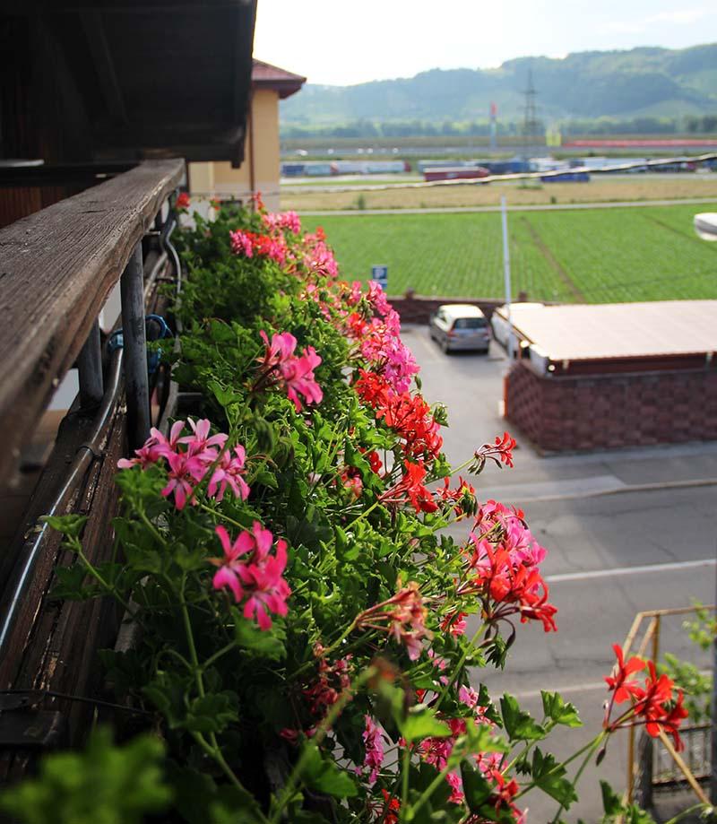 flores na varanda hotel hisa budja