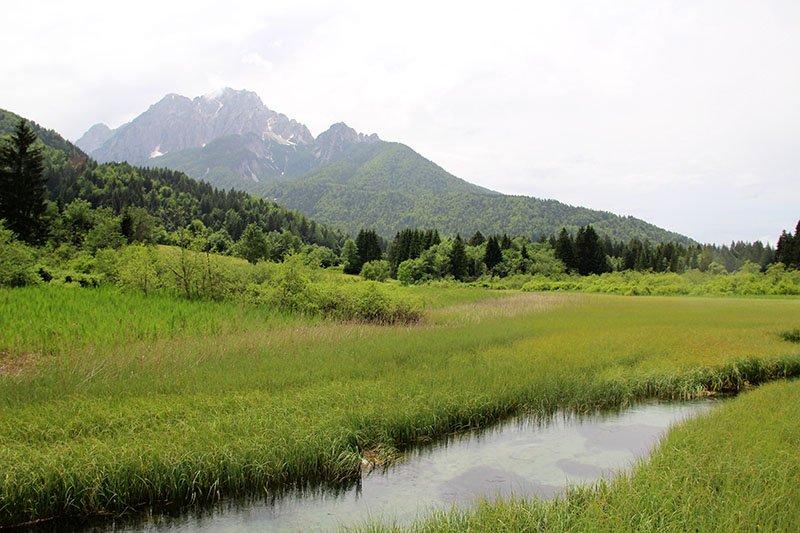 zelenci pantano eslovenia dicas