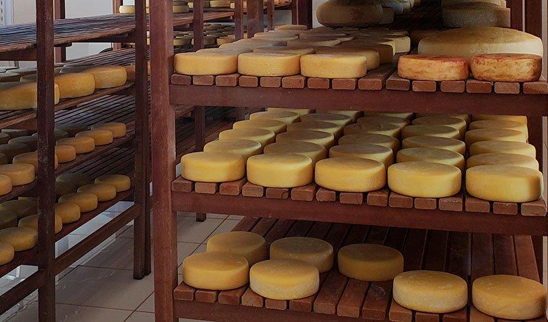 queijo canastra roça da cidade minas gerais
