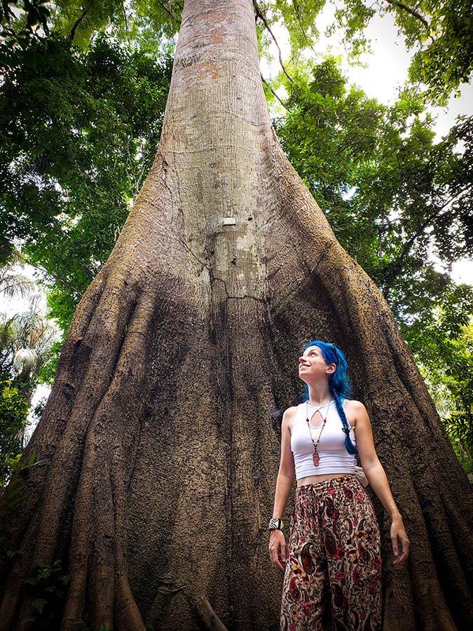 A fantástica árvore Sumaúma!