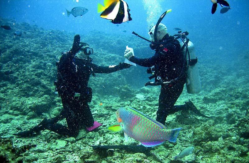 trabalhar como instrutor de mergulho