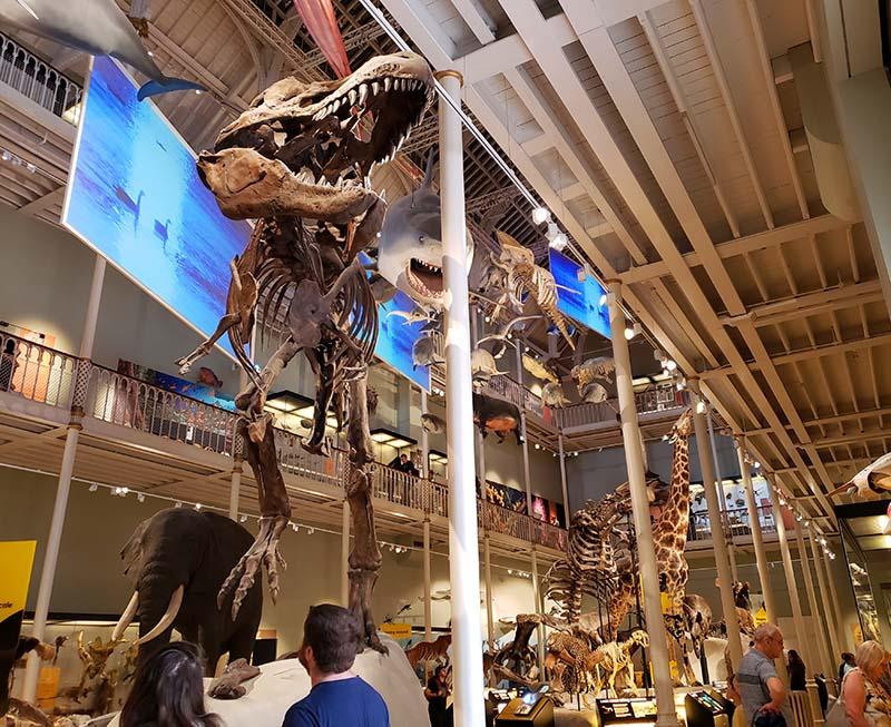 fossil tiranossauro rex museu nacional da escocia