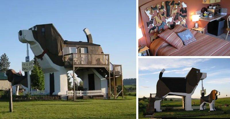 Casa de cachorro no Airbnb