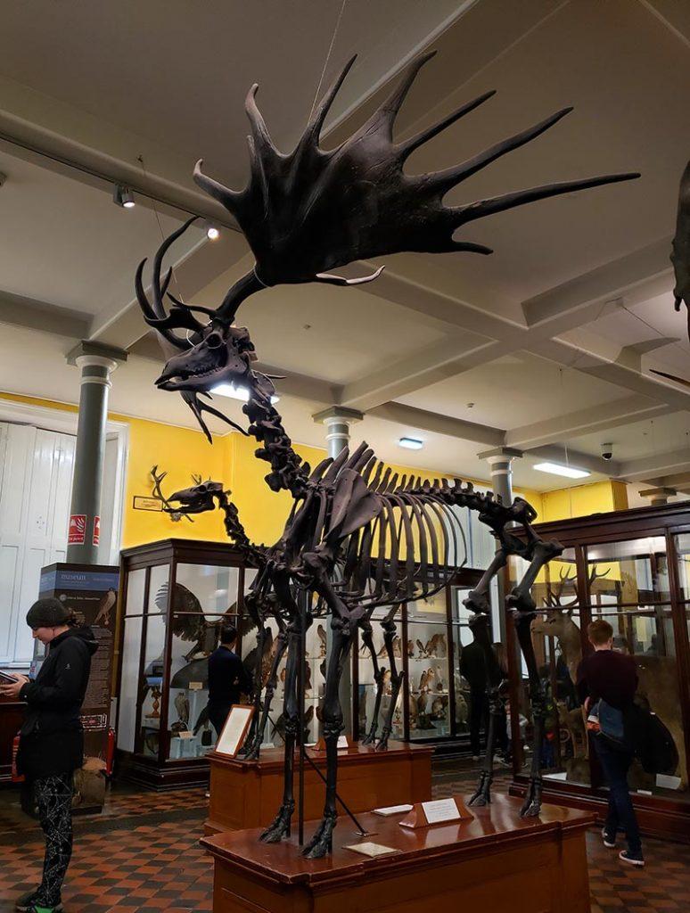 museu de historia natural de dublin cervo gigante