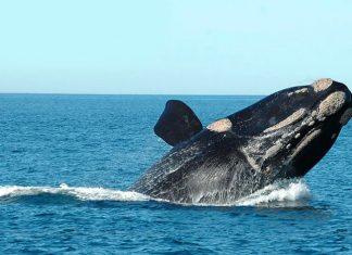 baleia franca cidades de catarina para conhecer no litoral