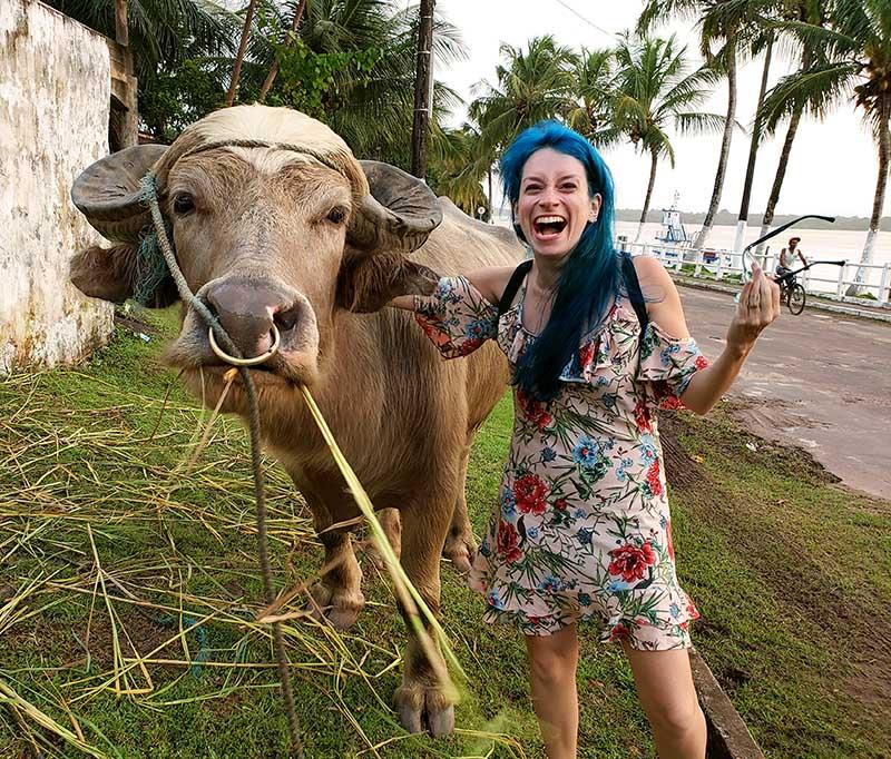 bufalo loiro comendo grama