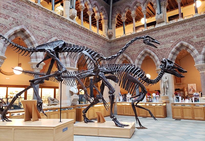 fosseis dinossauro museu historia natural inglaterra