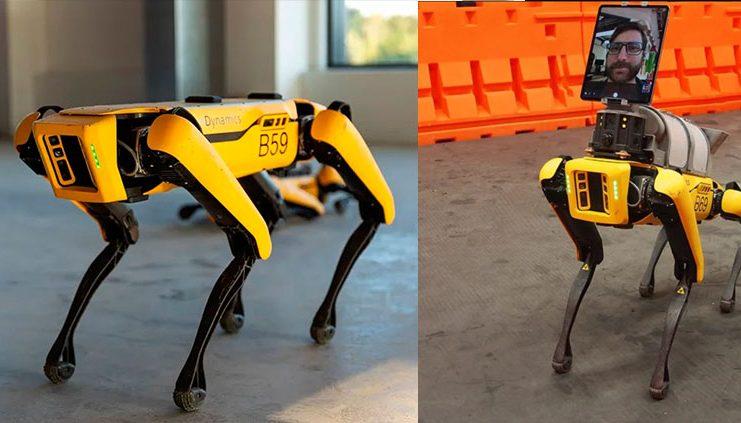 cachorro robo pandemia coronavirus