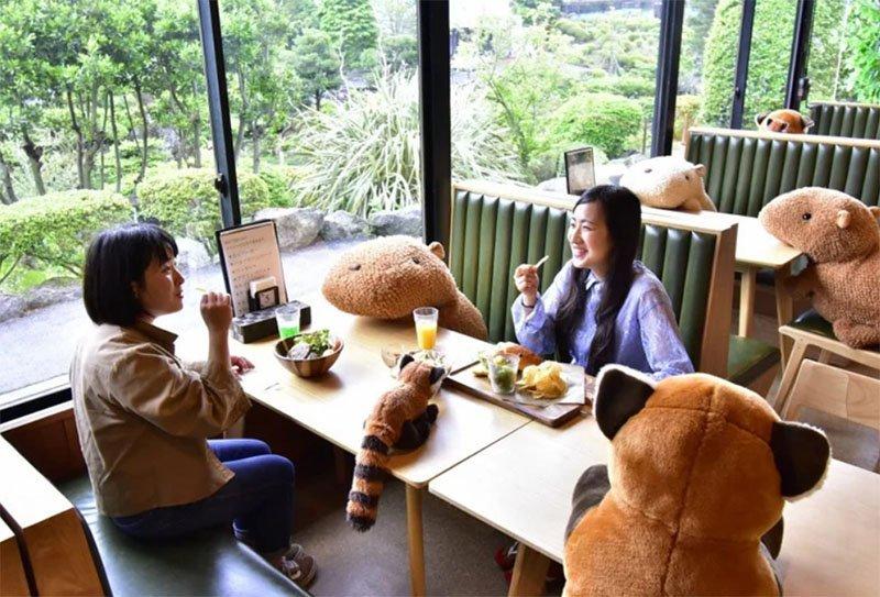 zoologico japao capivaras de pelucia