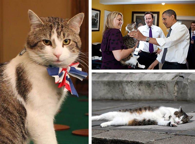 gato larry primeiro ministro britanico