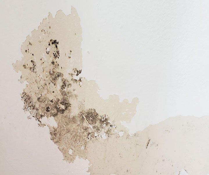 mofo na parede