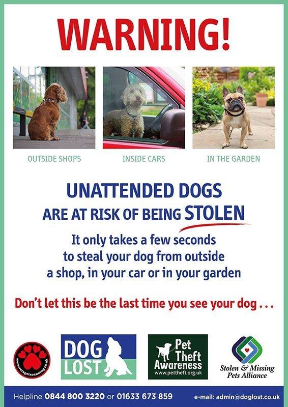 cartaz cachorro roubo reino unido